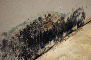 Tips to Remove Mold from the Walls