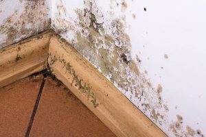 mold remediation and removal in Wilmington, MA by ServiceMaster Disaster Associates, Inc.
